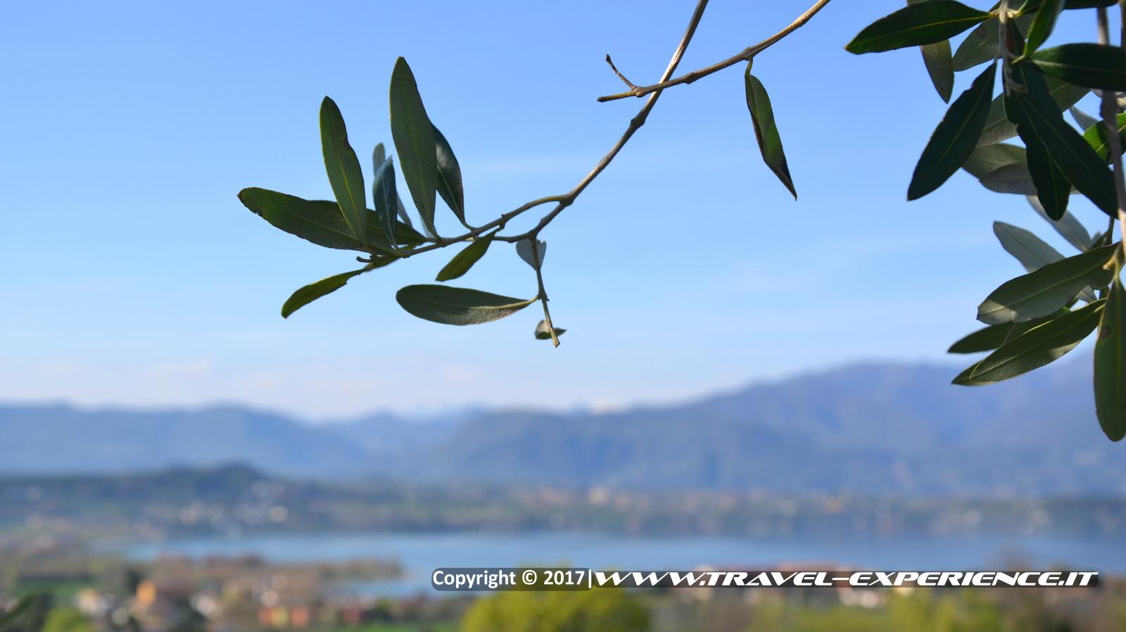 Foto paesaggio e ulivo a Manerba