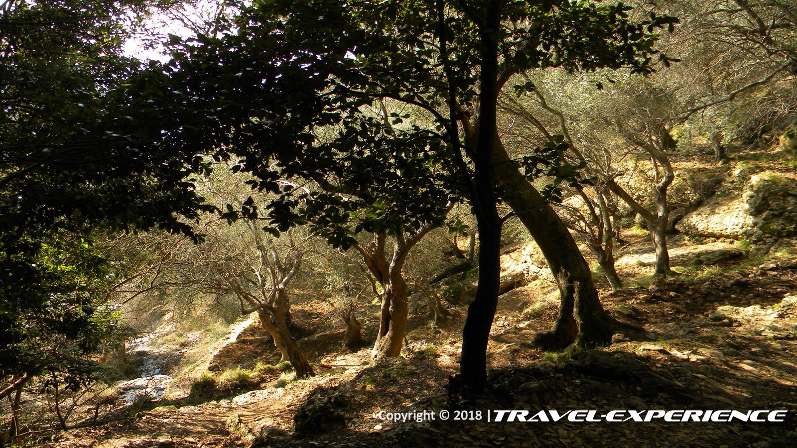 foto bosco a San Fruttuoso di Capodimonte