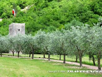 Bosco di San Francesco d'Assisi, FAI
